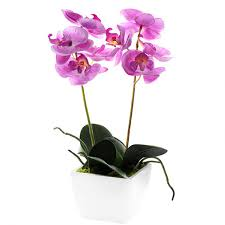 silk orchids coloured silk orchid pot plant in white container modern dining