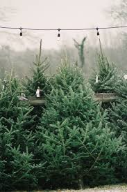 live christmas trees potted christmas lights decoration