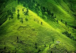 beautiful nature green mountain umair chaudhry my website my world