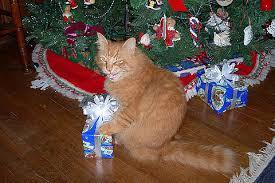cat christmas daily christmas calendar band of cats