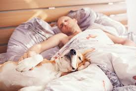 Man Sleeping In Bed 9 Tips For Sleeping Soundly With A Dog In The Bed Mnn Mother