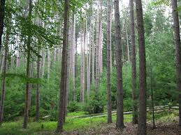 New Jersey forest images The jersey i know jpg