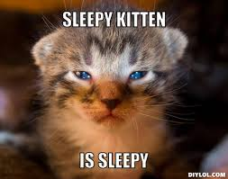Sleepy Cat Meme - sleepy cat meme generator image memes at relatably com