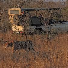 safari safari experience