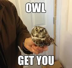 Owl Memes - soon owl animals know your meme