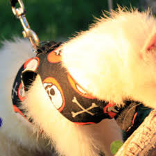 Ferret Costumes Halloween Octostitches Etsy Wanelo