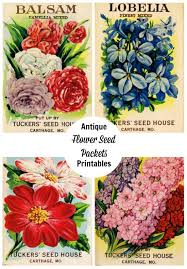 flower seed packets seed packet printables shop talk knick of time