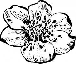 simple black and white drawings of flowers images pictures clip