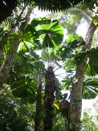 2 day 1 night 4wd tour daintree rainforest bloomfield track