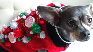 cats and dogs partying like animals in ugly holiday sweaters