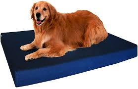 5 best dog beds for labs 2017 labradors love these beds