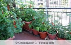 gem se pflanzen balkon gemüse auf dem balkon anbauen gemüseanbau in balkonkästen