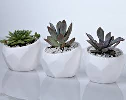 Indoor Planter Pots by Pin By M O D E R N H O M E By Happy Planters On Geometric