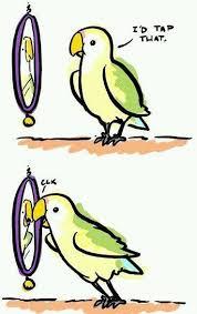 Parrot Meme - self loving parrot meme guy