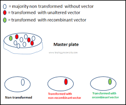 5 steps in recombinant dna technology or rdna technology biology