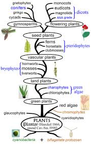 wiki 4 global changes from growing transport to smart evolutionary history of plants wikipedia