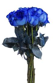 blue roses tinted blue roses for sale flower explosion