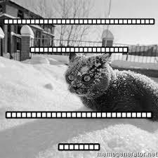Cat Cocaine Meme - sudden clarity cocaine cat meme generator