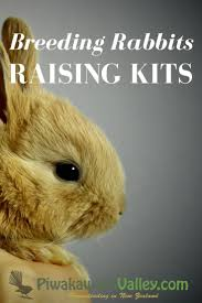 128 best rabbits images on pinterest raising rabbits bunny