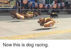 Wiener Dog Meme - he wieners now this is dog racing dogs meme on me me