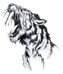 25 tiger drawing ideas tiger sketch