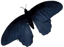 butterfly wings offer a model for better solar cells