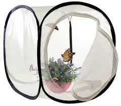 small pop up pop up butterfly insect habitat succulent mini