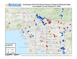 Ucr Campus Map Update On Late Summer Polyphagous Shot Hole Borer Movement