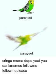 Yeet Meme - parakeet parayeet cringe meme dope yeet yee dankmemes followme