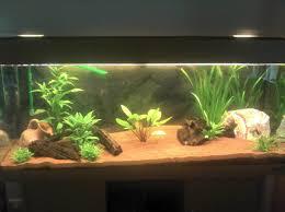 idee deco aquarium idee meuble aquarium aquarium design id es originales de meubles