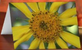 flower note cards flower greeting cards