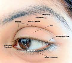 Eye Ducts Anatomy 12 Best Anatomy Eyes Images On Pinterest Anatomy Anatomy