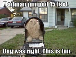 Funny Cat Memes Tumblr - funny tumblr