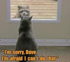 Funny Raccoon Meme - i m sorry dave i can t let you in cat and raccoon looking