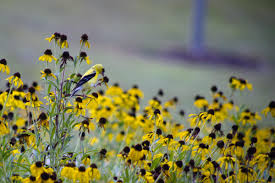 native north texas plants plants for birds audubon texas