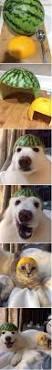 Sofa King Jokes by Doggy Jokes Stonehouse Dog Training Club