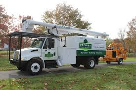 premier tree service inc tree services 831 stumfp hill dr