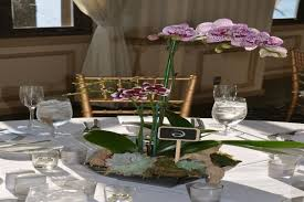 orchid centerpiece best 25 potted orchid centerpiece ideas on orchid