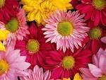 ผนังบ้านสวยสดชื่นขึ้นได้ด้วยภาพดอกไม้ | HomeIdea.