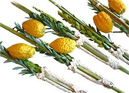 etrog for sale lulav and etrog set complete kosher arba minim delivered fresh for
