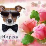 free ecards for birthday free ecards birthday cards ecards free fugs info