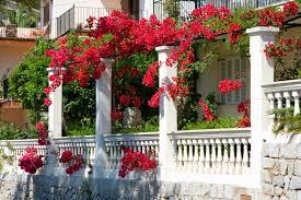 the best vines for pergolas and arbors