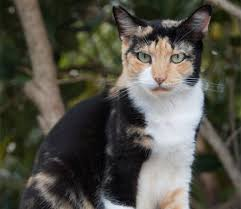 Barn Cat Names Catpals Adoptable Cats