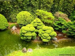 imagenes de jardines japones jardín japonés de san francisco o japanese tea garden
