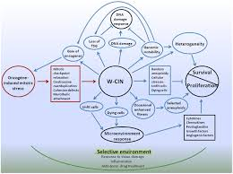 Cell Reproduction Concept Map Answers Cell Cycle Concept Map Synthesis Characterization Cytotoxicity