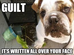 Guilt Meme - guilt it s written all over your face guilt dog quickmeme