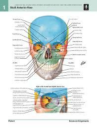 3d Human Anatomy 3d Human Anatomy Free Www Oustormcrowd Com