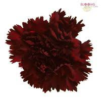 wholesale carnations burgundy carnations wholesale bloomsbythebox