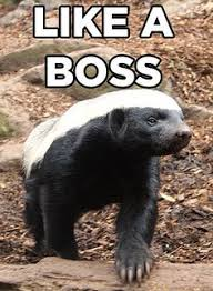 Honey Badger Memes - honey badger google search leadership pinterest honey badger