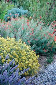 california native plant garden design 1004 best california native drought u0026 heat resistant plants